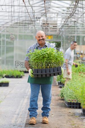mature man holding plants in garden
