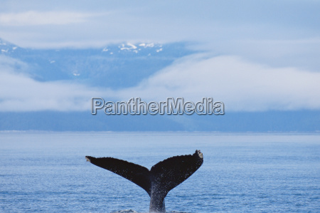 a whales tail