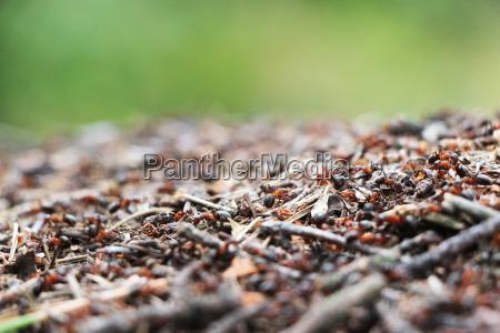 anthill ants work