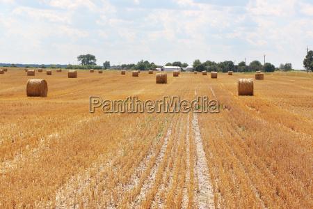 haystacks field sun farm