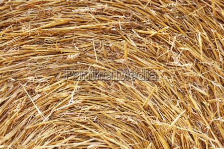sun haystack background