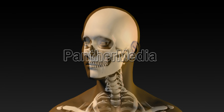 medical illustration of human body and