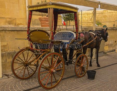 maltese carriage
