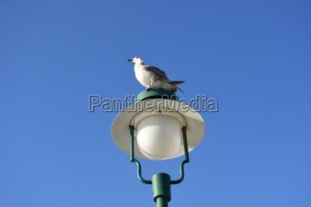 seagull sea bird lantern street lamp
