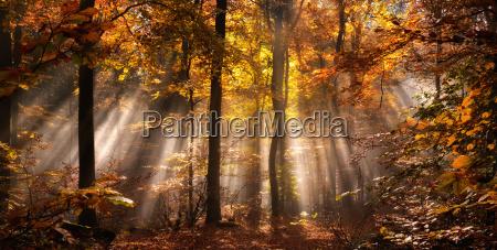 magical light mood in a foggy