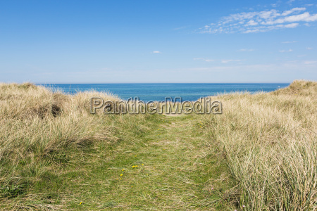 dunes with grass and sea in