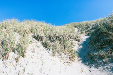dunes on the north sea in
