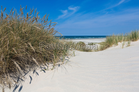 beach oats and dunes in summer