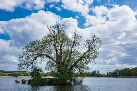 tree in koelpinsee on the island