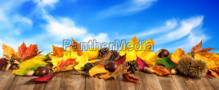 autumn leaves on wood with sky