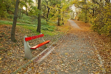 autumn park with bench