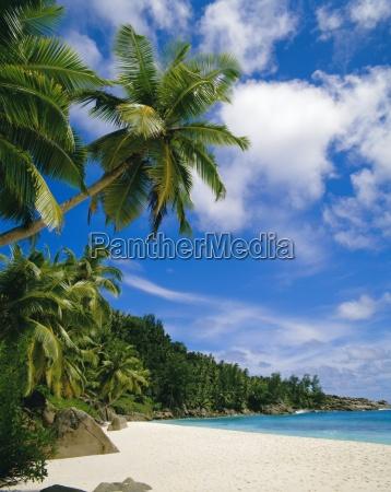 arboles y palmeras de playaseychelles