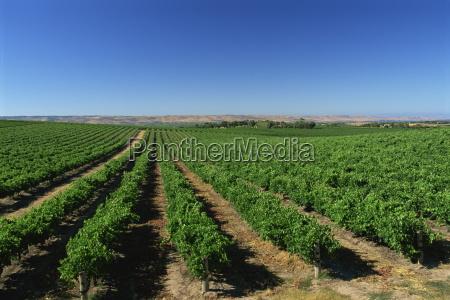 vineyards oliverhill wines mclaren vale south