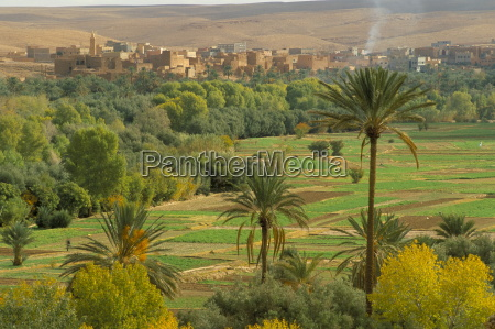 view over cultivated fields and palms