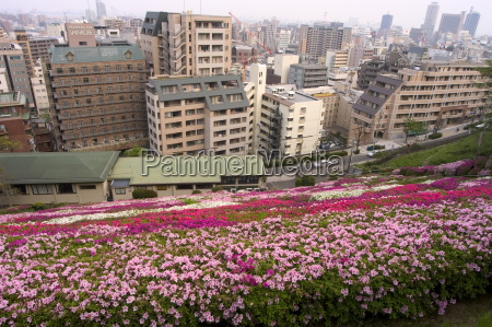 flower bed view of city kobe