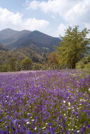 spring flowers cantabria spain europe