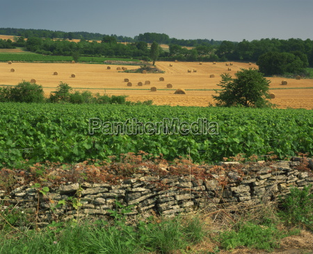 agricultural landscape of vineyards and fields