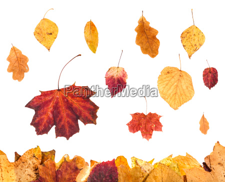 collage from red and yellow leaves
