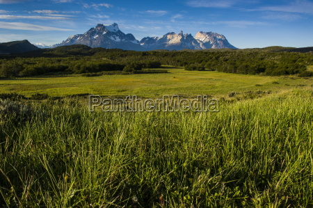 green grass torres del paine national