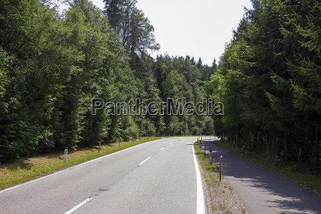 road without vehicles through forest area