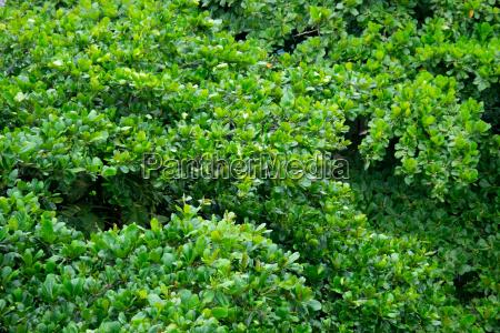 top of trees in rio de