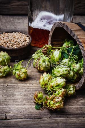 autumn, hop, harvest - 19116565