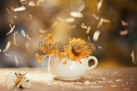 orange aster flowers in a vase
