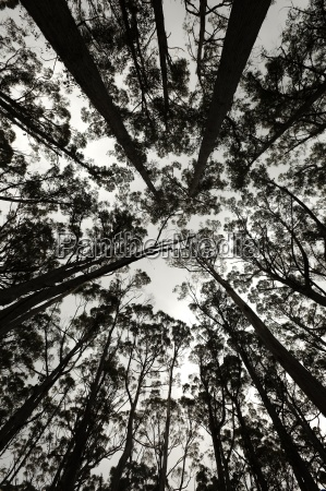 forest silhouette looking up