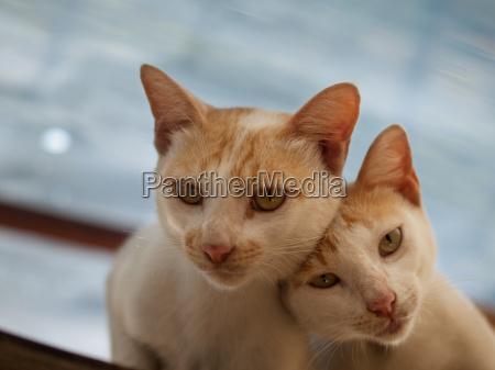 couple cats