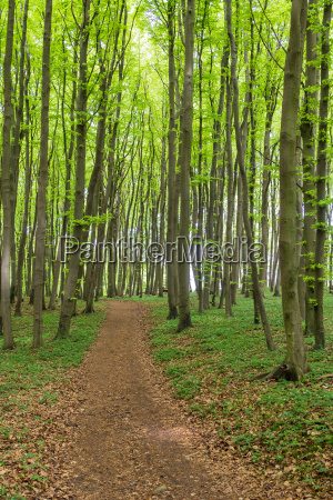coastal forest on the island of