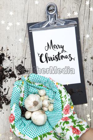 creative, christmas, card, for, a, garden - 19160983