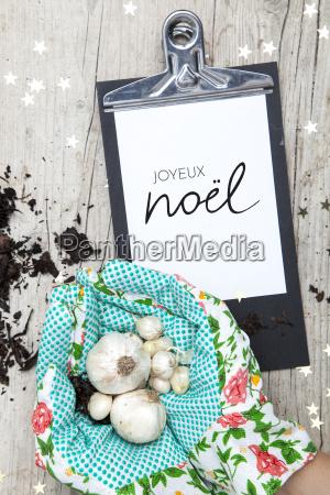 creative, christmas, card, for, a, garden - 19161033