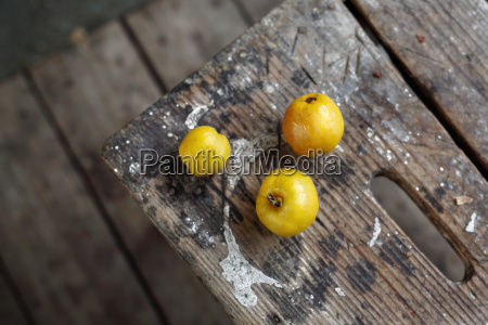 fruit quince