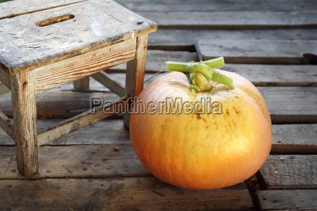 season on the pumpkin
