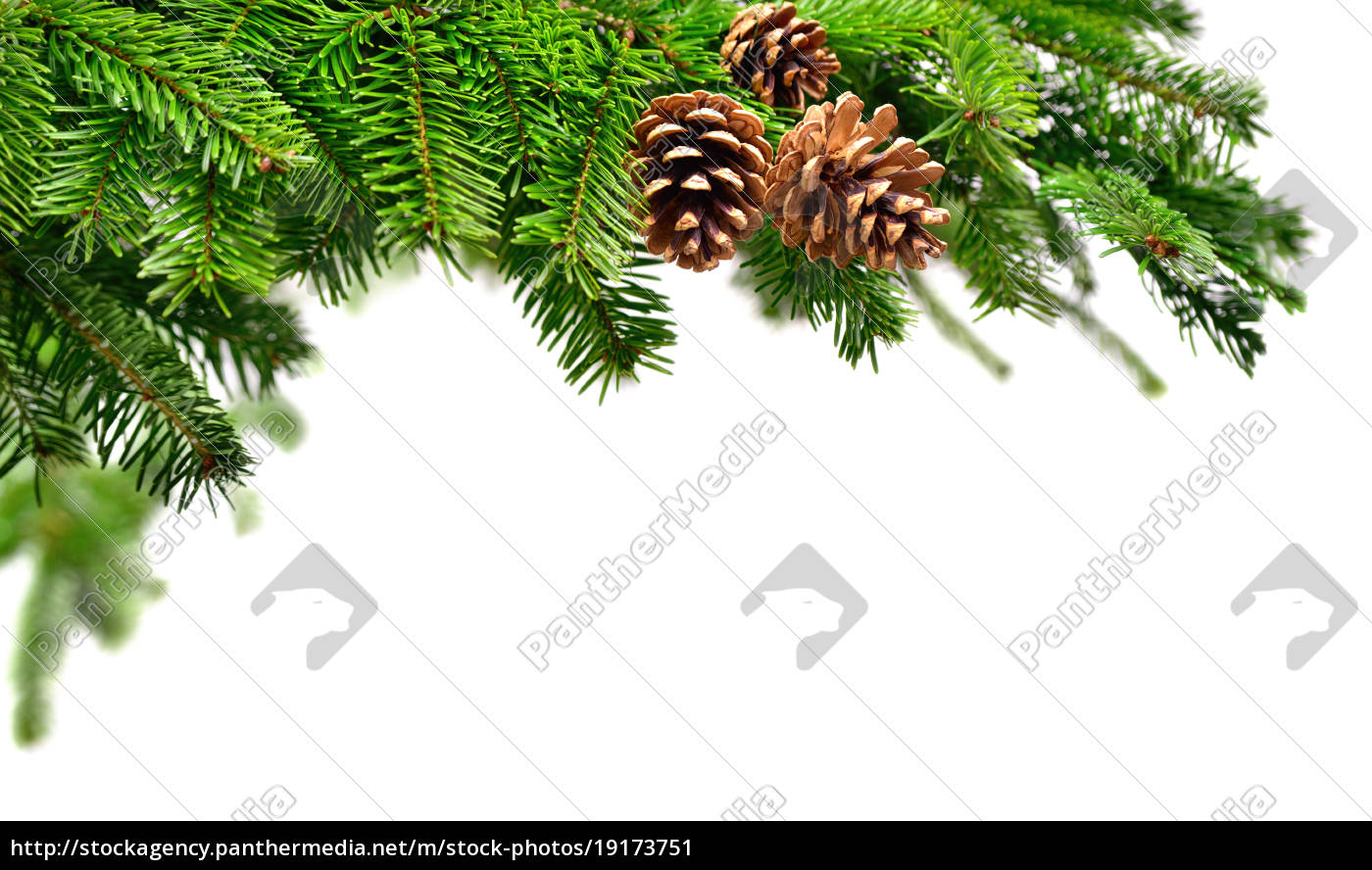 fresh, fir, branches, with, pine, cones - 19173751