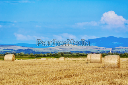 haystacks, on, the, field - 19175977