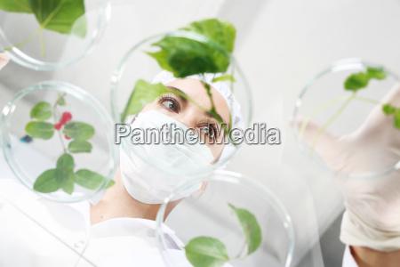 biotechnologist engineer at work