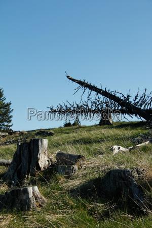 trees tree trunks tree line in