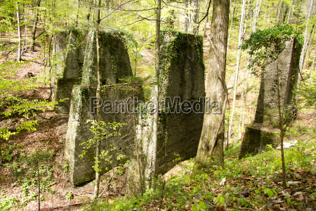 old dilapidated piers in a forest