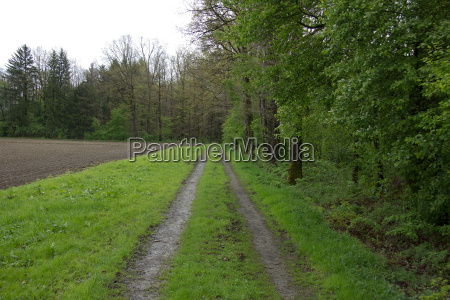 gravel road next to a field
