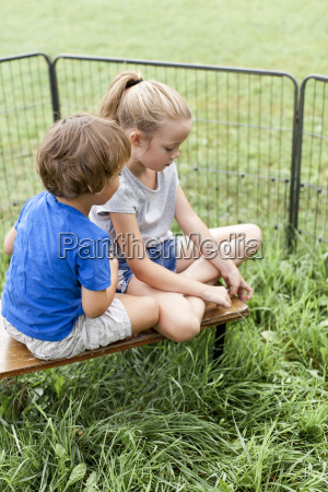 children play with rabbits