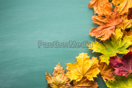 colorful, autumn, leaves. - 19207101