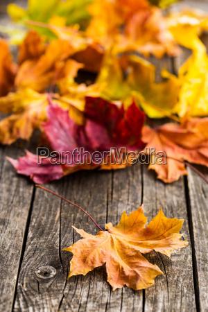 colorful, autumn, leaves. - 19207103