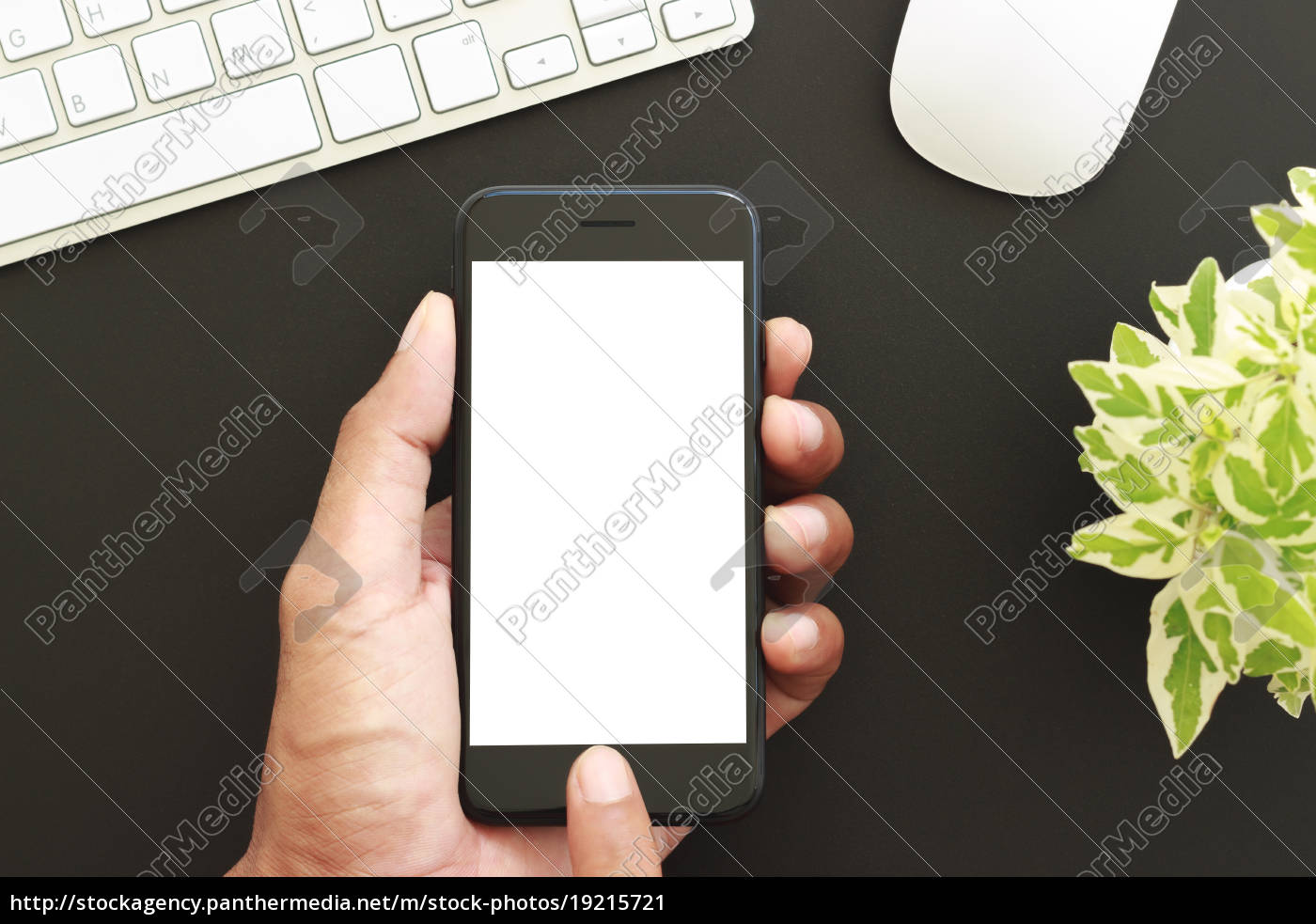 hand, hold, phone, white, screen, display, - 19215721