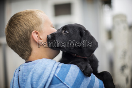 curious labrador puppy affectionately sniffing his