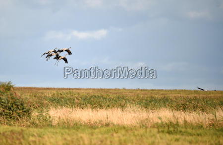 cranes land