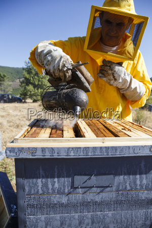 beekeeper in protective suit using smoker
