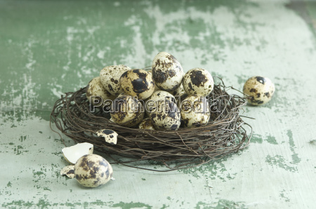 easter nest of quail eggs