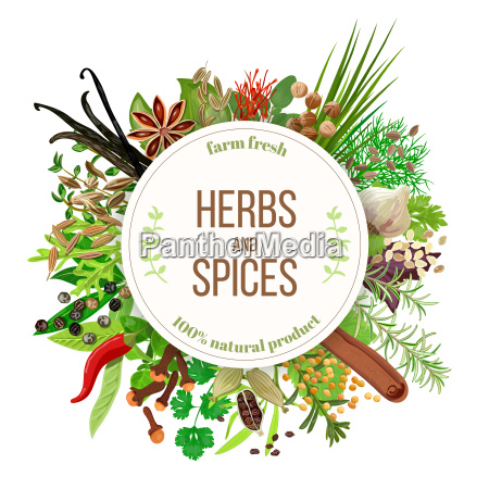 culinary herbs and spices big set