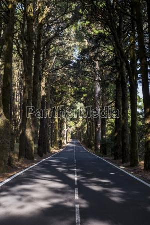 spain tenerifa empty road forest